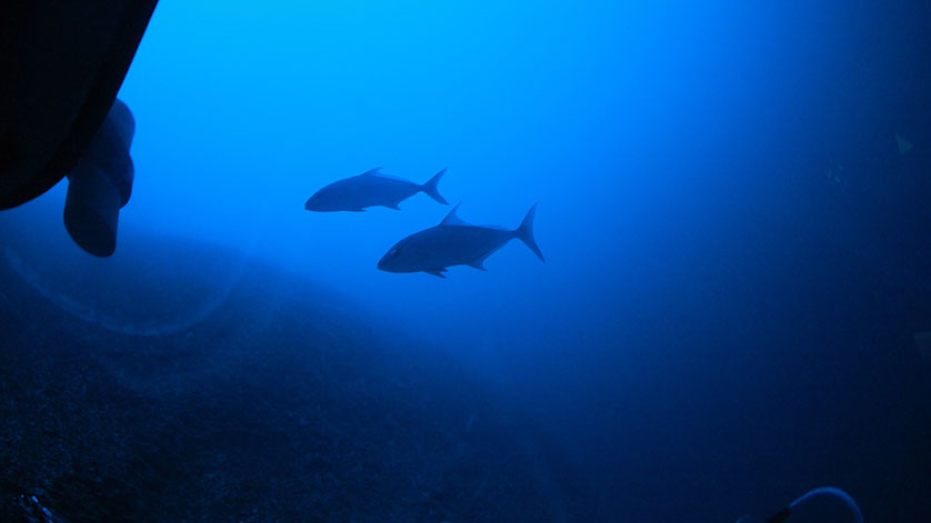 The Race for The Deep