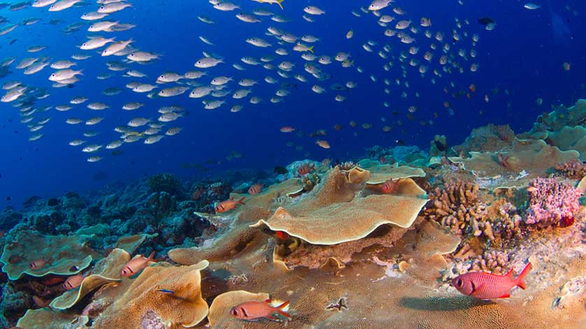 Ocean Supporters and Scripps Scientists Dive into ...