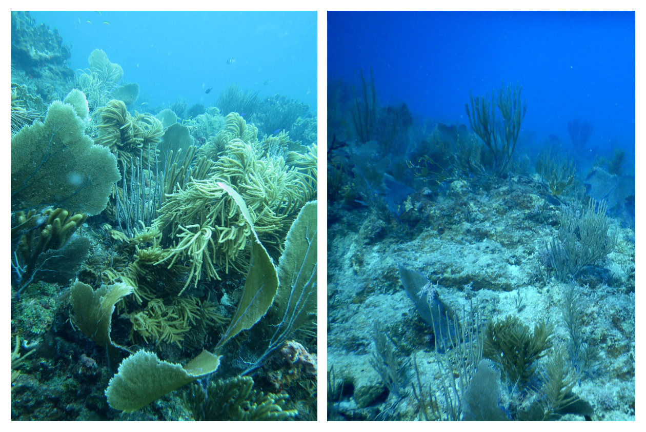 2st john reef before after