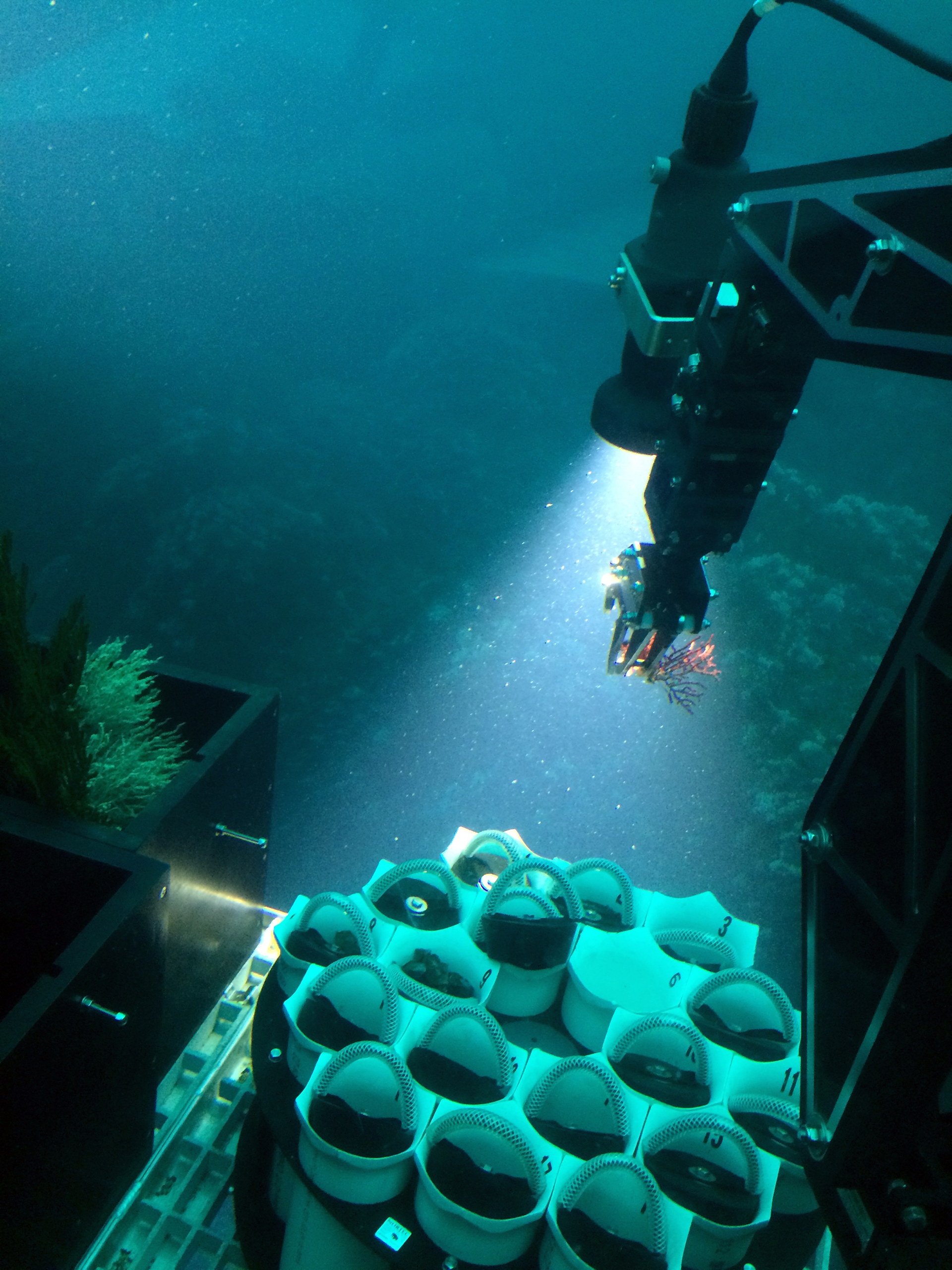 2 deepsea submersible collects coral sample