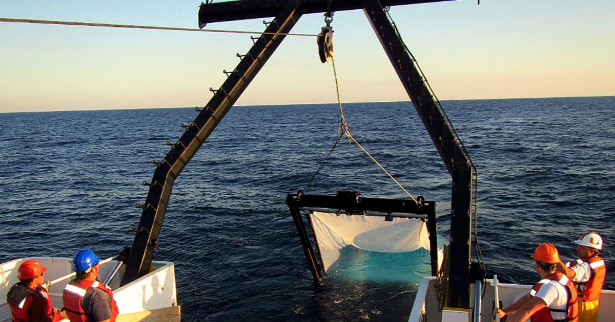 NOAA Awards $15.6 Million in Grants for Gulf of Mexico Research