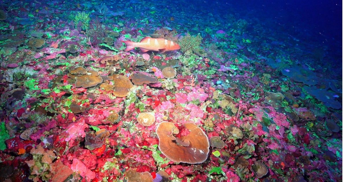 Australian Scientists Discover New Corals at Great Barrier Reef Marine Park